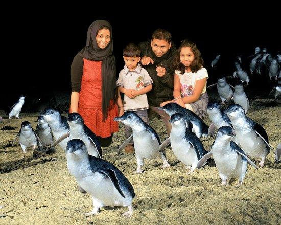Phillip Island Nature Park: penguin parade