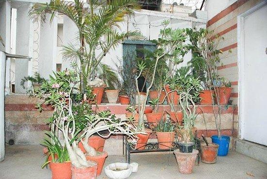 Maulsari: Terrace