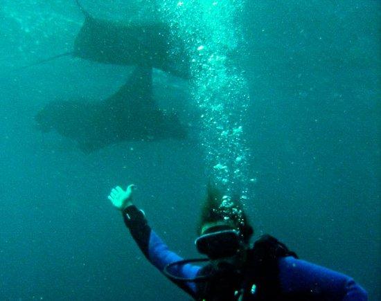 Baliku Dive Resort (Amed Bali Diving): Manta Point