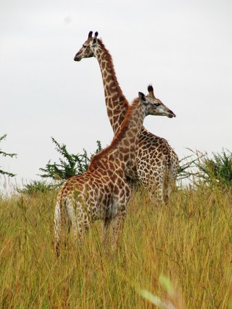 Nkomazi Game Reserve: Awesome - Mamma and Baby