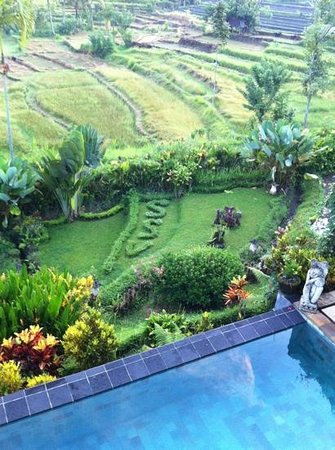 Surya Shanti Villa : pool side