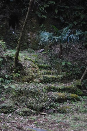 Iwami-Ginzan Silver Mine: Moss steps