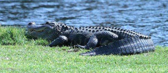Eagle Ridge Golf Club : The course pet