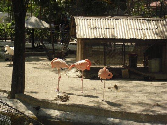 La Aurora Zoo: aves varias, flamencos