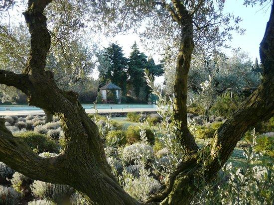 La Capucine : Au milieu des oliviers ...