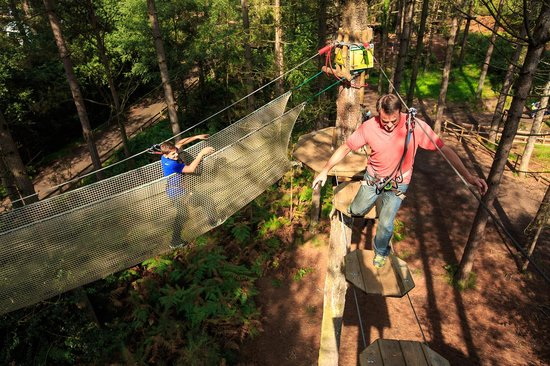 Go Ape at Grizedale Forest Cumbria