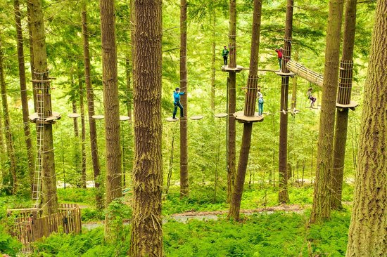 Enfield, UK: Go Ape Tree Top Adventure