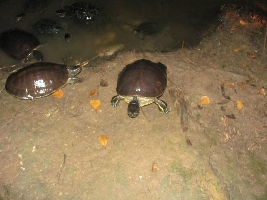 Tropical Princess Beach Resort & Spa: Turtle