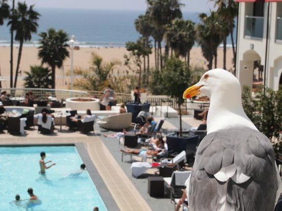 Loews Santa Monica Beach Hotel: Birds eye view...