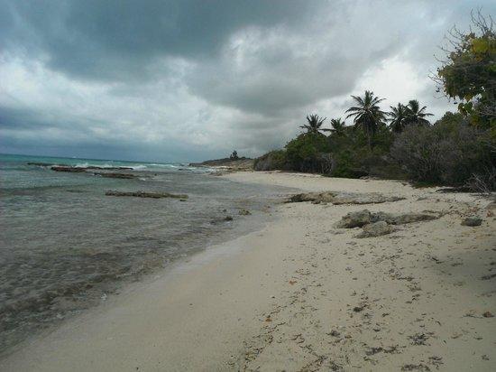 Village Ti Figues: plage a 100m du gite