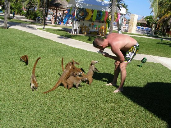 Grand Bahia Principe Coba: feeding animals