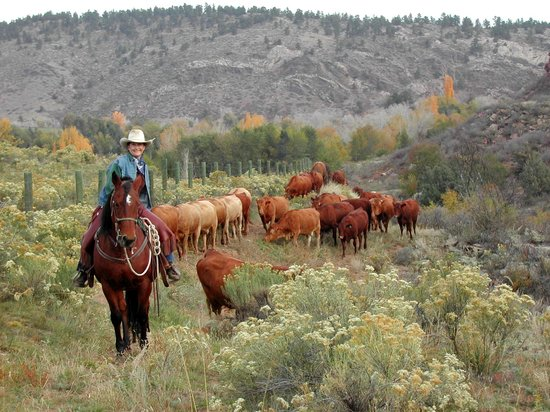 Sylvan Dale Guest Ranch: Working Cattle