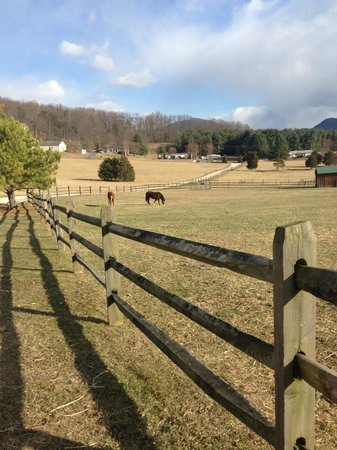 Fox Hill Bed & Breakfast Suites: Friendly horses enjoying the sunny afternoon