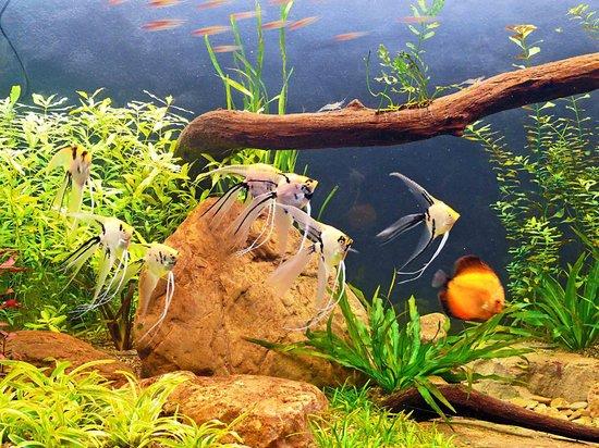 Fotos de peces amazonicos 26
