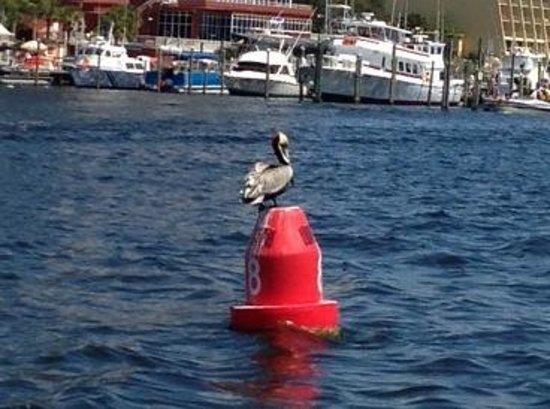 Emerald Coast Sailing: Channel guardian