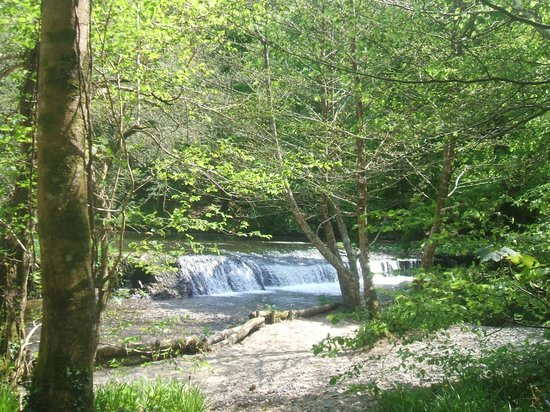 Plym Bridge Woods: The weir in plymbridge woods