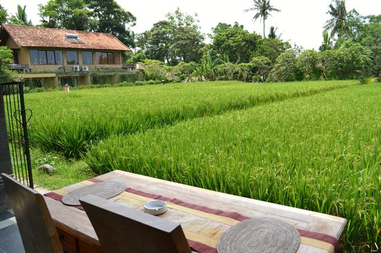 Bayu Guest House: view