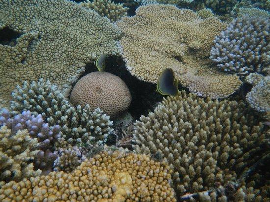Wananavu Beach Resort: Snorkelling trip