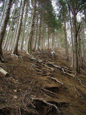 Mt. Kagenobu : 同所山からの下り