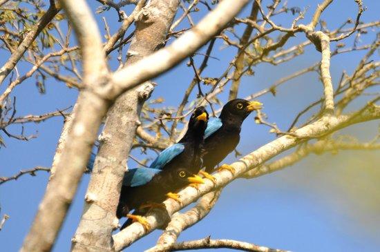 Jolie Jungle : For birds watchers