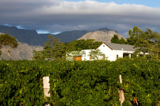 Rosenview Guest House: View of the rooms over the vineyards