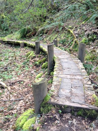 Skamania Lodge: Walking trail around Skamania