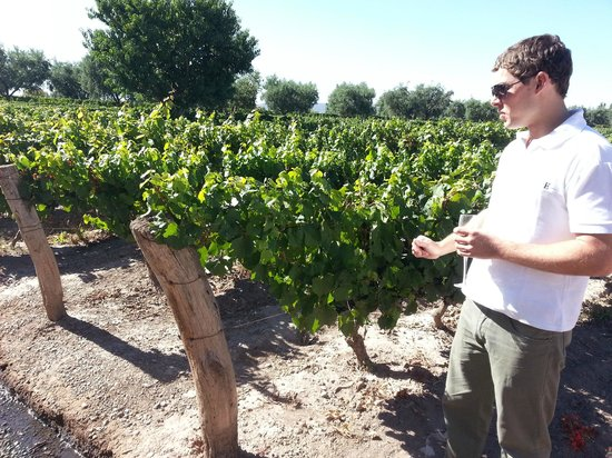 Ampora Wine Tours: Visit to one of the oldest vineyards in Mendoza.