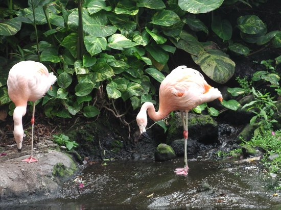 Westin Maui Resort And Spa: flamingoes