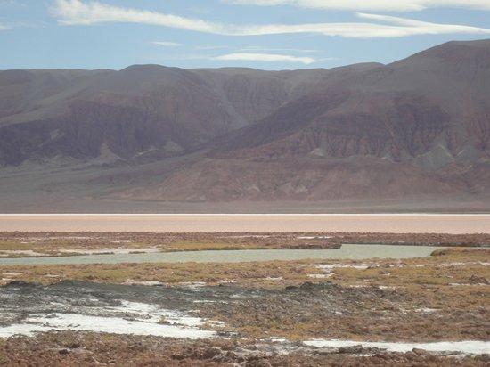 Antofagasta de la Sierra, Argentina: Laguna Carachi Pampa