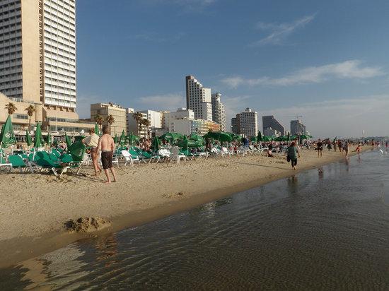 Frishman Beach : The beach