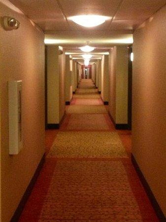 Hilton Garden Inn Lynchburg: hallway