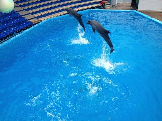 Архипо-Осиповский дельфинарий
