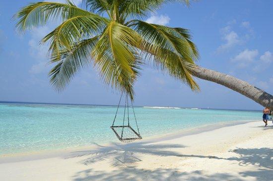 Vilamendhoo Island Resort & Spa: plage...