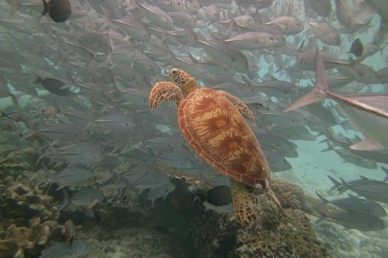 Scuba Junkie Hotel & Diving: the amazing Sipadan!