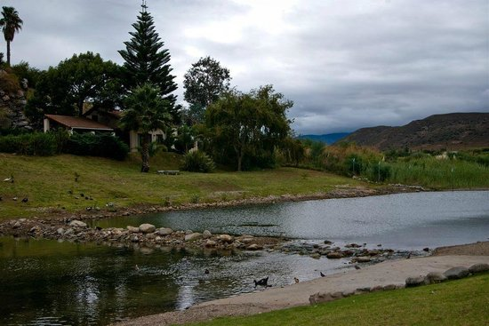 Montagu Springs Resort: The pond