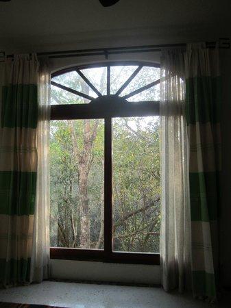 Hotel Okaan Restaurant: Aussicht vom Zimmer in den Urwald