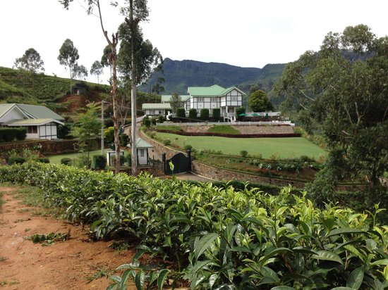 แลงเดล บาย อมายา: The hotel exterior surrounding by tea plantation