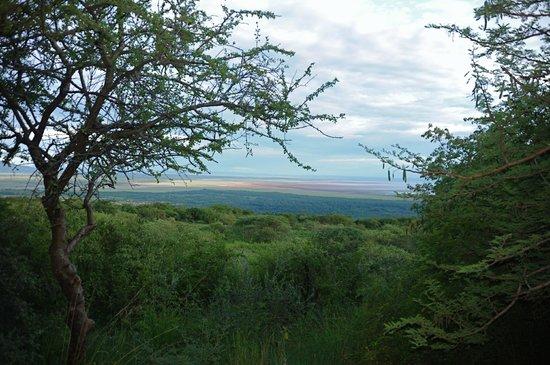 Kirurumu Manyara Lodge: view from front deck of Lake Manyara Park