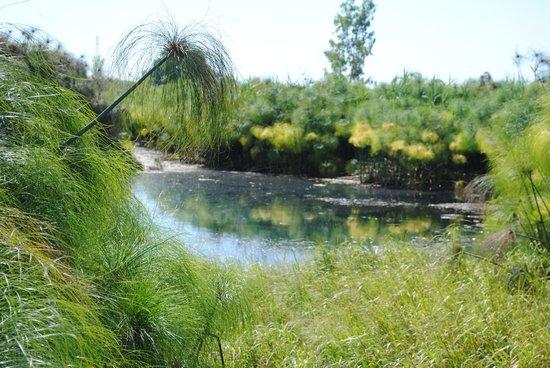Villa dei Papiri : vue du ruisseau et des papyrus du parc à proximité