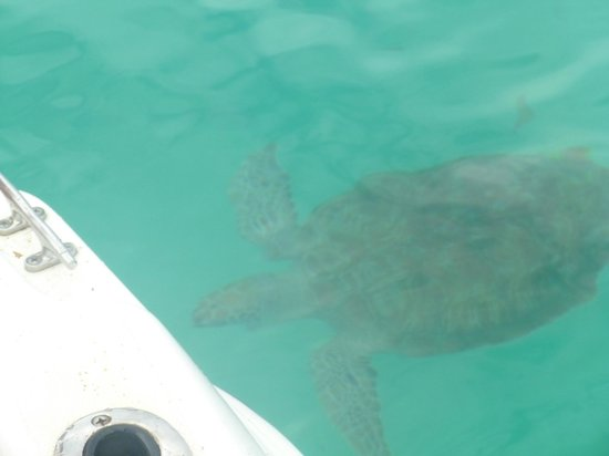 Mango Bay All Inclusive: Turtles