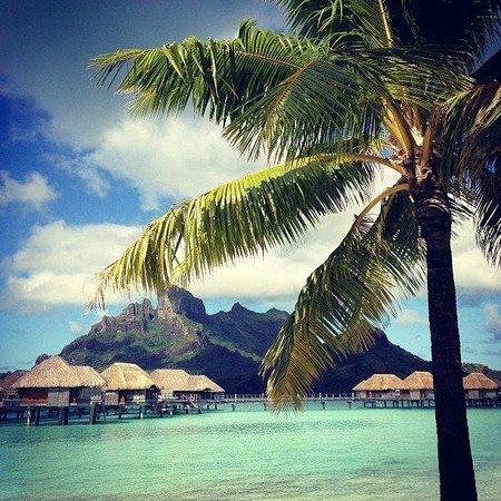 Four Seasons Resort Bora Bora: :)