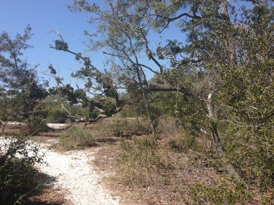Fort Pickens Campground: trail near the campground