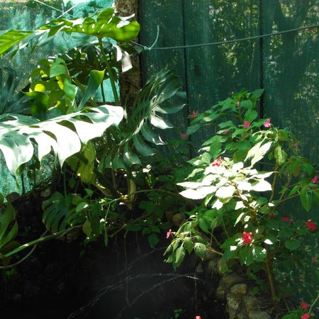 Hacienda Guachipelin : Butterfly exhibit