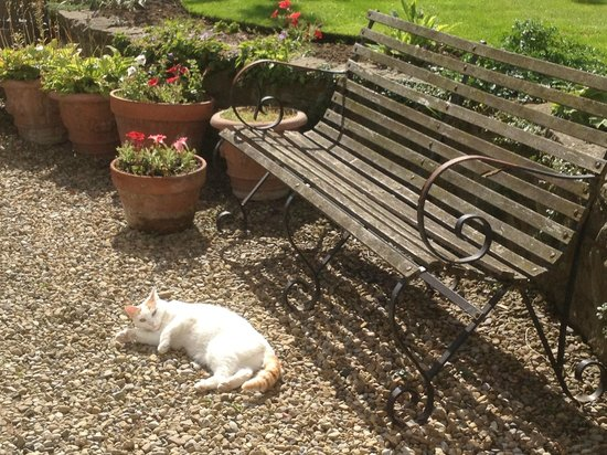 Altonlea Lodge Guest House: Bowie in the sun