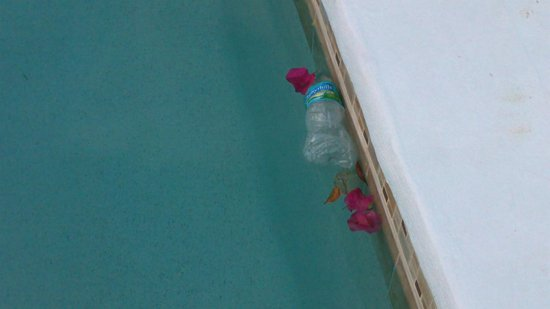 Paradise Cove Oceanfront Villas & Suites: Empty water bottle in pool