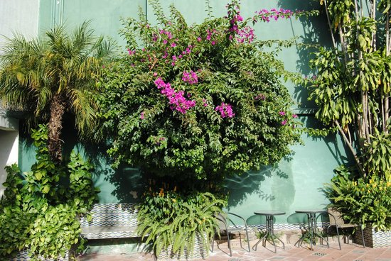 Hotel Casa Antigua: Beautiful flowering plants are everywhere.