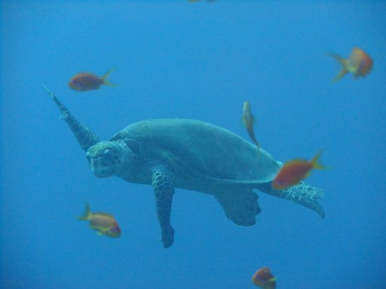 Dive Africa : Turtle at Yolanda