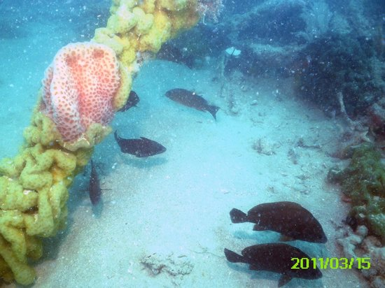 Scuba Marco: Sandy bottom with lots of life around