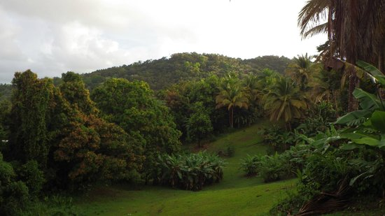 Ceiba Country Inn: Backyard