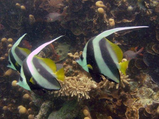 Mafia Island Lodge: Scuba Diving